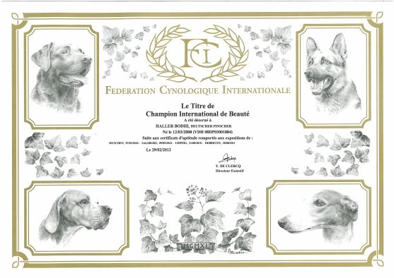 Deutscher Pinscher Haller Bodhi_Internationaler Champion_World Club Winner